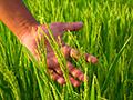 hand in crop